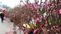 Rừng người đi chợ hoa Tây Hồ sắm Tết