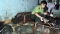Ủy ban nhân dân tỉnh Bắc Ninh bán đấu giá động vật quý hiếm vận chuyển trái phép