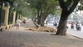 Người dân lên tiếng việc Hà Nội chặt 6.700 cây xanh