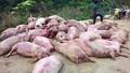 Hải Dương: Bắt quả tang cơ sở chế biến thịt lợn chết
