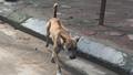 Nhiều người còn chưa biết từ ngày mai cấm thả rông chó