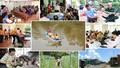 Gắn kết tín dụng chính sách với tín dụng thương mại để hộ nghèo thoát nghèo bền vững
