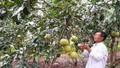 Khẳng định hiệu quả tín dụng chính sách xã hội ở Tuyên Hóa