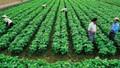 Đất nông nghiệp có thể được miễn thuế đến ngày 31/12/2025?