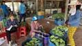 Thị trường xuất khẩu xoài của Việt Nam còn rất lớn
