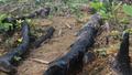 Chủ tịch UBND tỉnh Quảng Ninh yêu cầu làm rõ vụ phá rừng ở Hoành Bồ