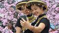 Quảng Ninh: Du khách sẽ thưởng ngoạn Lễ hội hoa Anh đào – Mai vàng Yên Tử trong 4 ngày