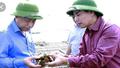 Quảng Ninh: tìm ra nguyên nhân hàu chết gây thiệt hại 82 tỷ đồng