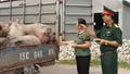 Quảng Ninh: Bộ đội mua lợn thịt hỗ trợ hỗ trợ người chăn nuôi
