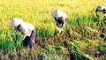 Sẽ có hội nghị toàn quốc về an ninh lương thực của Việt Nam
