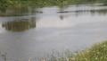 Nam học sinh gieo mình xuống sông tự tử