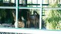 Vinpearl Safari Phú Quốc đón đợt động vật quý hiếm đầu tiên