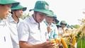 Đẩy mạnh sản xuất giống ngô mới tại Thanh Hóa