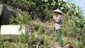 Chuyện lạnh người dọc đèo Hải Vân