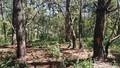 Lâm Đồng: Khẩn trương điều tra vụ đẽo gốc, đổ hóa chất vào cây rừng phòng hộ