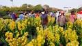Hà Nội chiều 30 Tết: Đào, quất, hoa tươi cơ bản được giải cứu