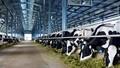 Vinamilk đưa vào hoạt động trang trại bò sữa Hà Tĩnh đạt chuẩn quốc tế