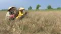 Cà Mau 'hỏa tốc' chống hạn hán, nguy cơ cháy rừng