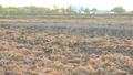Cà Mau: Dự báo hạn, mặn có thể kéo dài đến tháng 6