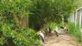 Khẩn cấp tăng cường phòng cháy, chữa cháy đối với Vườn chim Bạc Liêu