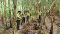 Rừng tràm An Giang tiềm ẩn nguy cơ gây cháy rừng cao nhất