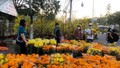 Chợ hoa kiểng Bạc Liêu ngày 30 Tết giảm giá nhưng ít người mua