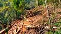 Khởi tố các đối tượng chặt phá rừng phòng hộ