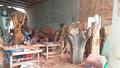 """""""Dự án phát triển làng du lịch cộng đồng Cẩm Phú"""" – Hướng phát triển đầy tiềm năng của thị xã Điện Bàn"""