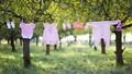 Mẹo giặt quần áo thơm phức trong mùa mưa