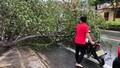 2 phụ nữ Quảng Bình bị thương nặng do ảnh hưởng bão số 5