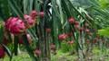 Vĩnh Phúc tăng cường phát triển du lịch canh nông