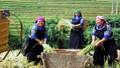 Yên Bái nỗ lực giảm 4% tỷ lệ hộ nghèo trong năm 2020