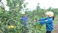 Hòa Bình mở rộng thị trường tiêu thụ nông sản