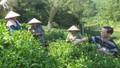 Thái Nguyên: Hiệu quả từ chương trình đào tạo nghề cho người yếu thế