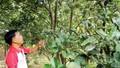 Supe Lâm Thao đồng hành cùng nhà nông Phú Thọ