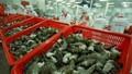 Kế hoạch hành động quốc gia phát triển ngành tôm