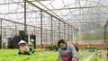 Hà Nội phát triển chuỗi giá trị nông sản: Cần đến vai trò của doanh nghiệp
