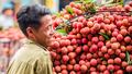 1.000 tấn vải thiều Bắc Giang đã được nhận tiêu thụ với giá 30.000 đồng/kg