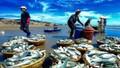 Nhận diện chiêu lừa đảo mạo danh các công ty xuất khẩu Na Uy