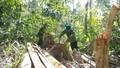 Khởi tố thêm 12 lâm tặc trong vụ phá rừng quy mô lớn ở Phú Yên
