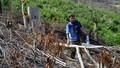 Kỷ luật hàng loạt cán bộ, đảng viên liên quan đến vụ phá rừng ở Phú Yên
