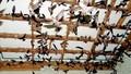 Phú Yên kiên quyết xử lý nghiêm các vi phạm nuôi chim yến không phù hợp quy hoạch