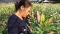 Tây Tựu: Người dân nín thở chờ hoa nở