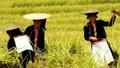 Người Việt đi du lịch Việt