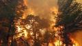 Cảnh báo nguy cơ cháy cao độ ở rừng miền Trung