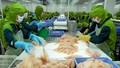 Về 32 lệnh cảnh báo doanh nghiệp Việt của FDA: Rốt ráo đi tìm nguyên nhân