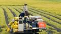 Cơ cấu lại ngành nông nghiệp đang có chuyển biến tích cực