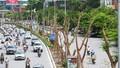 """Vì sao Hà Nội """"xin"""" cơ chế đặc biệt để trồng 600 ngàn cây xanh?"""