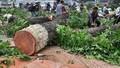 Kiến nghị kỷ luật lãnh đạo Sở Xây dựng Hà Nội vụ chặt hạ cây xanh