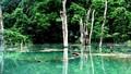 Xây dựng Công viên động vật hoang dã tại Ninh Bình